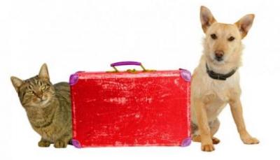 Domáci maznáčikovia a dovolenka: aké sú možnosti?